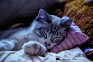 pastillas para dormir gato durmiendo